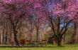 Tavasz tér 30x45 cm Fotódekoráció